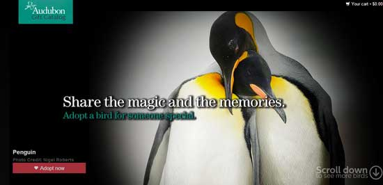 penguinsweb